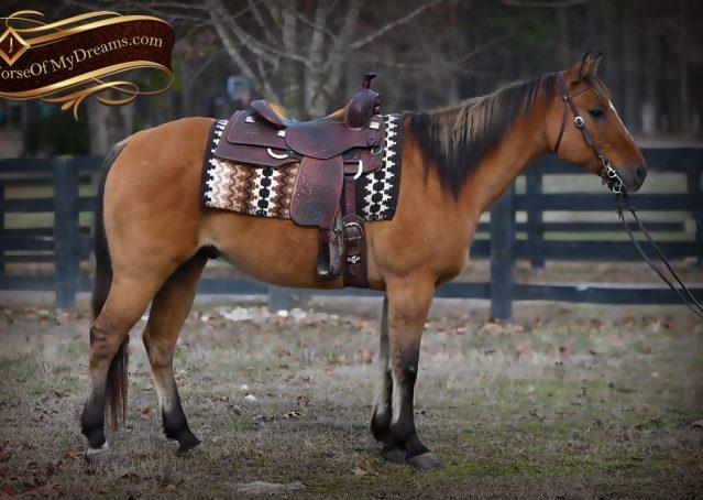 006-Phoenix-Buckskin-Dun-Quarter-Horse=Gelding-For-Sale