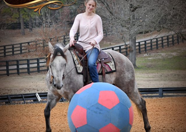 006-Sterling-Grey-AQHA-Quarter-Horse-trail-family-bombproof-for-sale