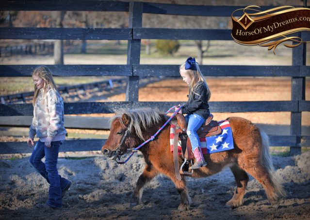 007-Ruby3-Chestnut-Pony-Mare