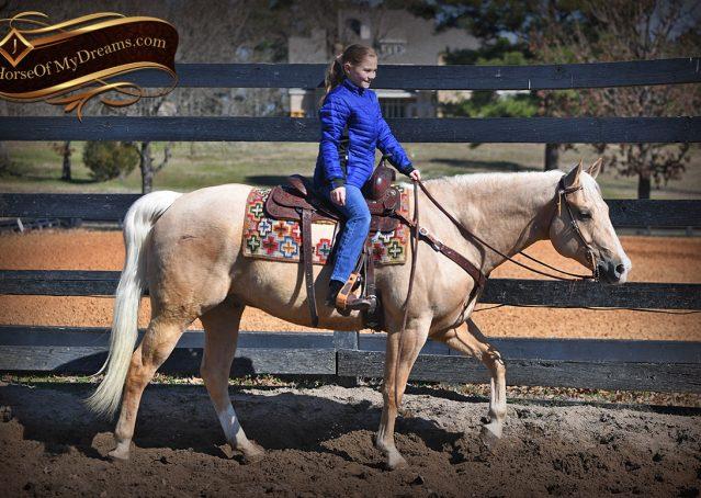 007-Shiner-Golden-Palomino-AQHA-NRHA-Reiner-Reining-Quarter-Horse-Gelding-For-Sale
