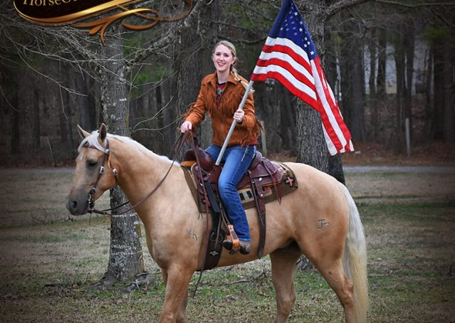008-Odie-AQHA-Palomino-Gelding-For-Sale