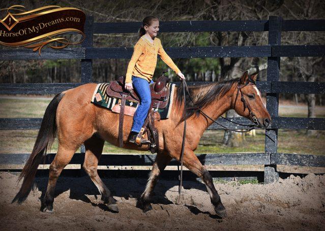 008-Phoenix-Buckskin-Dun-Quarter-Horse=Gelding-For-Sale