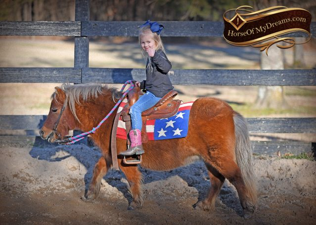 008-Ruby3-Chestnut-Pony-Mare