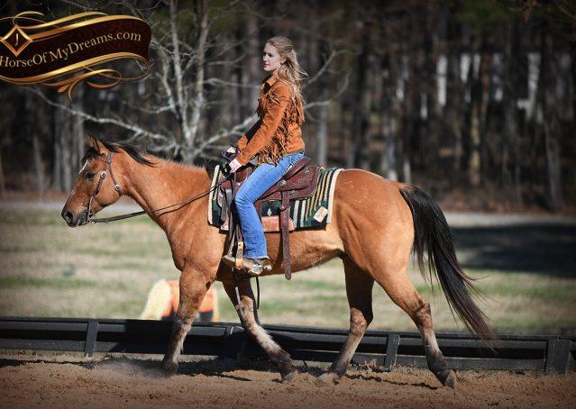 009-Phoenix-Buckskin-Dun-Quarter-Horse=Gelding-For-Sale