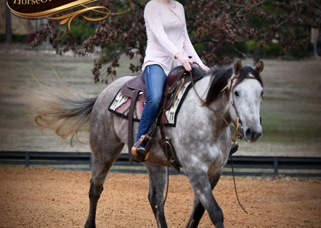 009-Sterling-Grey-AQHA-Quarter-Horse-trail-family-bombproof-for-sale