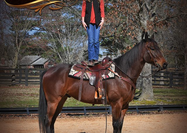 010-Cash-Bay-AQHA-gelding-for-sale