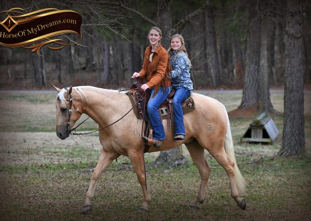 010-Odie-AQHA-Palomino-Gelding-For-Sale