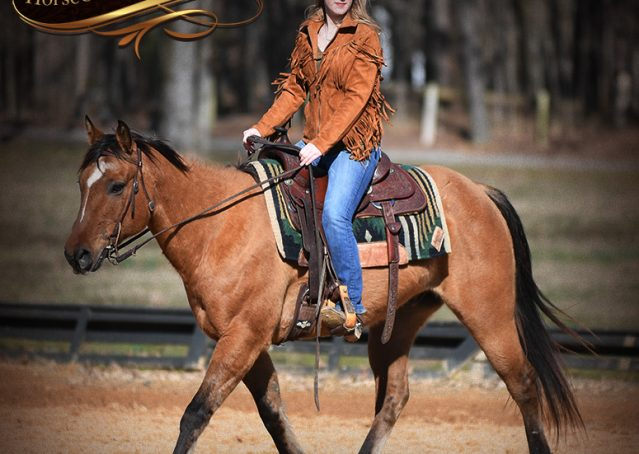 010-Phoenix-Buckskin-Dun-Quarter-Horse=Gelding-For-Sale