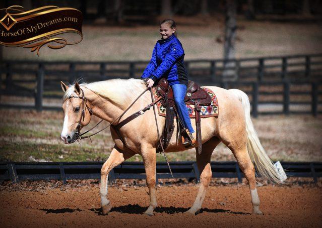 010-Shiner-Golden-Palomino-AQHA-NRHA-Reiner-Reining-Quarter-Horse-Gelding-For-Sale