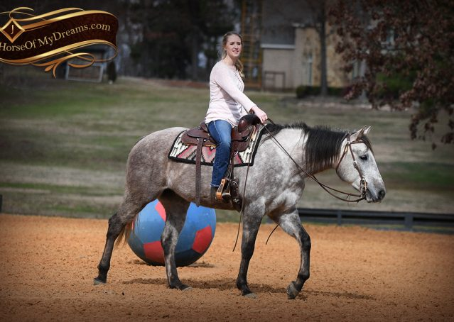 010-Sterling-Grey-AQHA-Quarter-Horse-trail-family-bombproof-for-sale