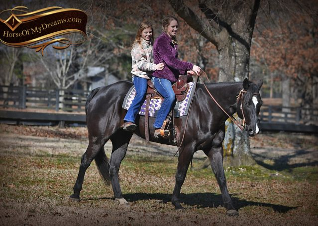 010-Tedd4-Black-AQHA-Gelding-For-Sale