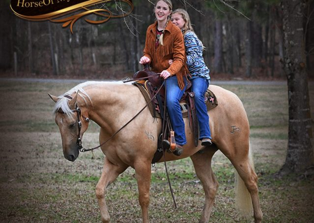 011-Odie-AQHA-Palomino-Gelding-For-Sale