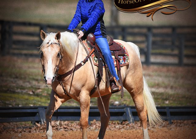 011-Shiner-Golden-Palomino-AQHA-NRHA-Reiner-Reining-Quarter-Horse-Gelding-For-Sale