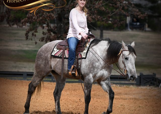 011-Sterling-Grey-AQHA-Quarter-Horse-trail-family-bombproof-for-sale