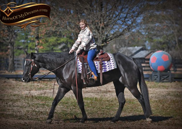 011-Tedd4-Black-AQHA-Gelding-For-Sale