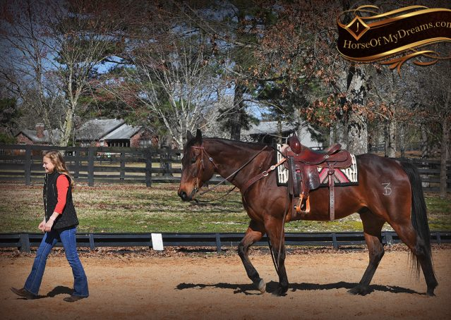 012-Cash-Bay-AQHA-gelding-for-sale
