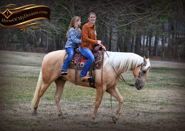 012-Odie-AQHA-Palomino-Gelding-For-Sale