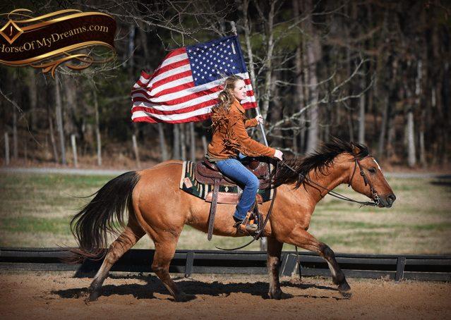 012-Phoenix-Buckskin-Dun-Quarter-Horse=Gelding-For-Sale