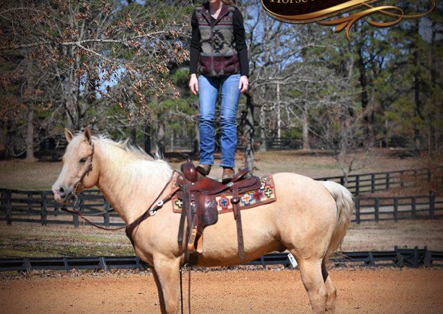 012-Shiner-Golden-Palomino-AQHA-NRHA-Reiner-Reining-Quarter-Horse-Gelding-For-Sale