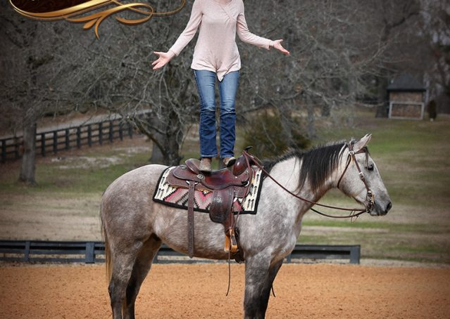 012-Sterling-Grey-AQHA-Quarter-Horse-trail-family-bombproof-for-sale
