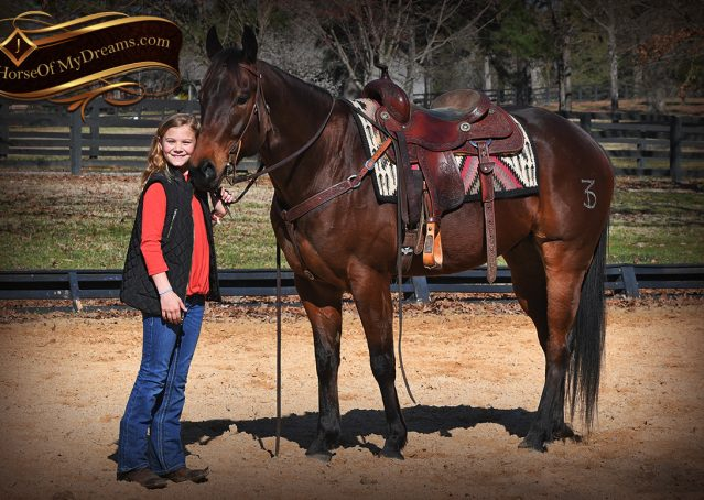 013-Cash-Bay-AQHA-gelding-for-sale