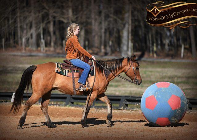 014-Phoenix-Buckskin-Dun-Quarter-Horse=Gelding-For-Sale