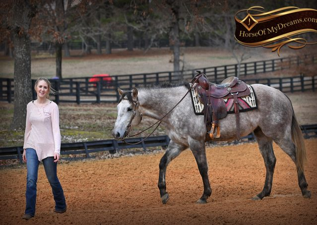 014-Sterling-Grey-AQHA-Quarter-Horse-trail-family-bombproof-for-sale