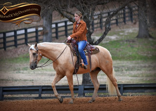 015-Odie-AQHA-Palomino-Gelding-For-Sale