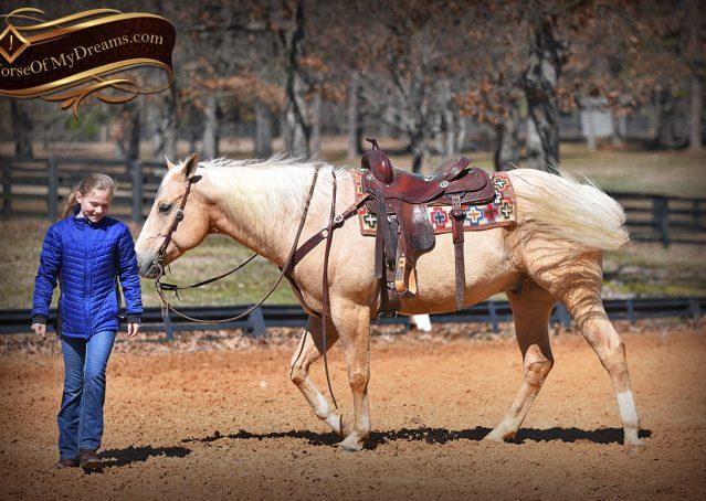015-Shiner-Golden-Palomino-AQHA-NRHA-Reiner-Reining-Quarter-Horse-Gelding-For-Sale