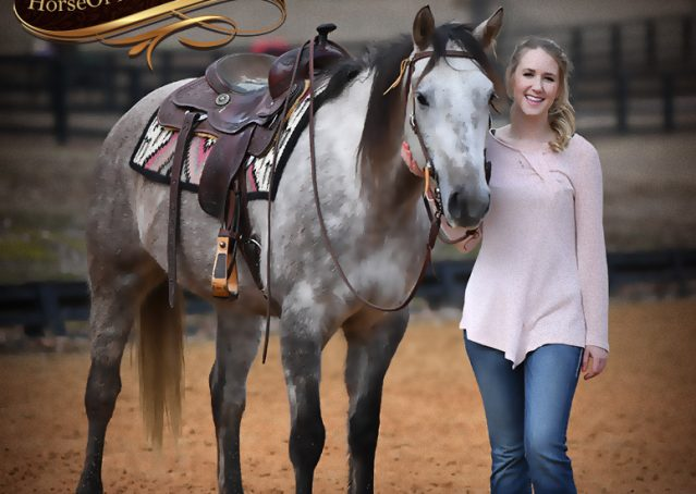 015-Sterling-Grey-AQHA-Quarter-Horse-trail-family-bombproof-for-sale