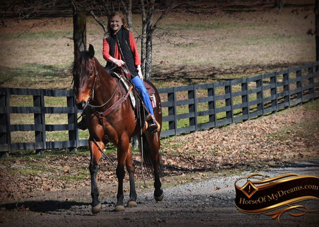 016-Cash-Bay-AQHA-gelding-for-sale