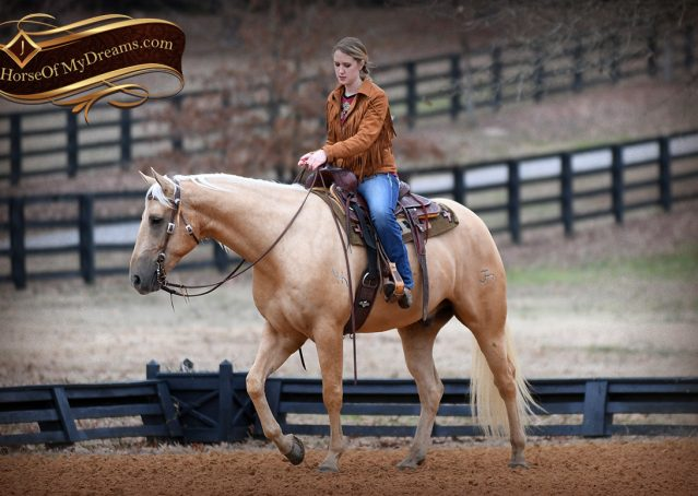 016-Odie-AQHA-Palomino-Gelding-For-Sale