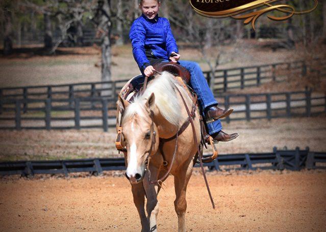 016-Shiner-Golden-Palomino-AQHA-NRHA-Reiner-Reining-Quarter-Horse-Gelding-For-Sale