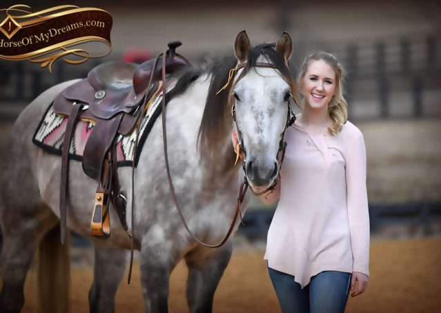 016-Sterling-Grey-AQHA-Quarter-Horse-trail-family-bombproof-for-sale