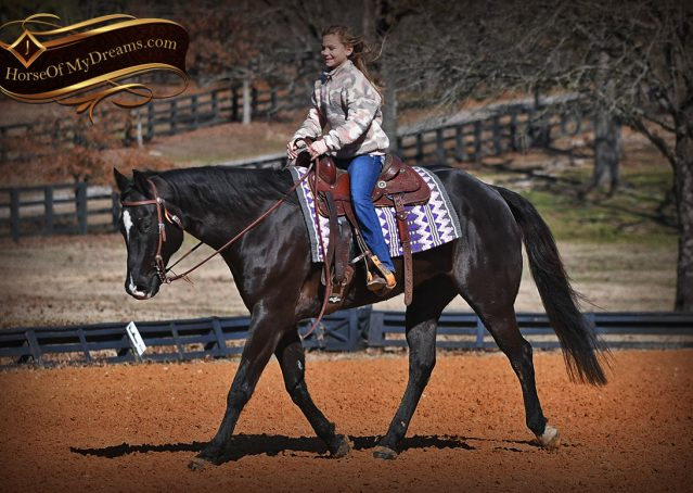 016-Tedd4-Black-AQHA-Gelding-For-Sale