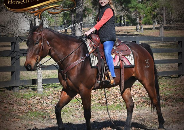 017-Cash-Bay-AQHA-gelding-for-sale