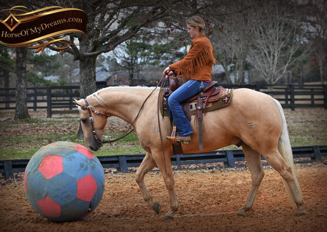 017-Odie-AQHA-Palomino-Gelding-For-Sale
