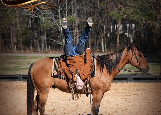 017-Phoenix-Buckskin-Dun-Quarter-Horse=Gelding-For-Sale