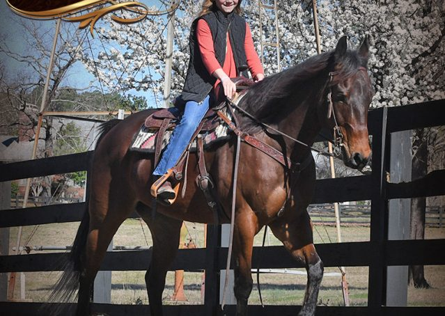 018-Cash-Bay-AQHA-gelding-for-sale