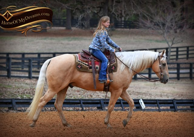 018-Odie-AQHA-Palomino-Gelding-For-Sale