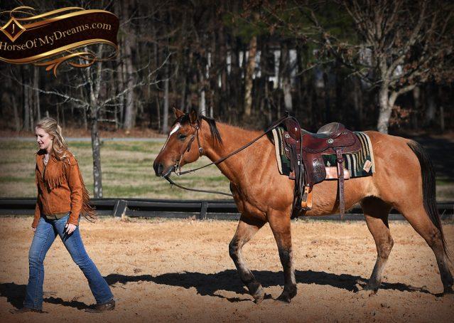018-Phoenix-Buckskin-Dun-Quarter-Horse=Gelding-For-Sale