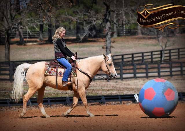018-Shiner-Golden-Palomino-AQHA-NRHA-Reiner-Reining-Quarter-Horse-Gelding-For-Sale
