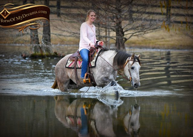 018-Sterling-Grey-AQHA-Quarter-Horse-trail-family-bombproof-for-sale
