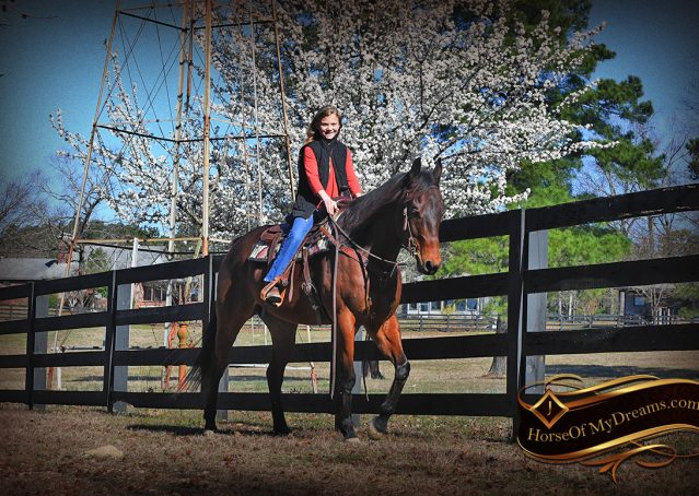 019-Cash-Bay-AQHA-gelding-for-sale