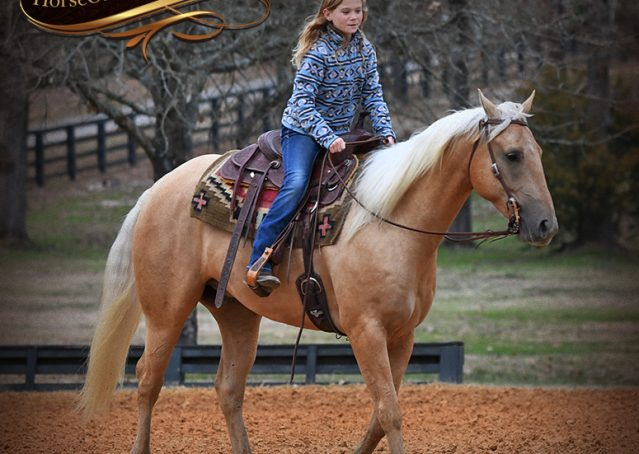 019-Odie-AQHA-Palomino-Gelding-For-Sale