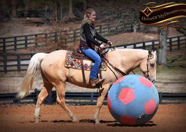 019-Shiner-Golden-Palomino-AQHA-NRHA-Reiner-Reining-Quarter-Horse-Gelding-For-Sale