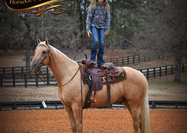020-Odie-AQHA-Palomino-Gelding-For-Sale
