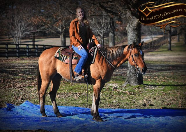 020-Phoenix-Buckskin-Dun-Quarter-Horse=Gelding-For-Sale