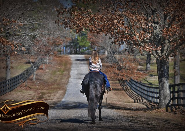 020-Tedd4-Black-AQHA-Gelding-For-Sale