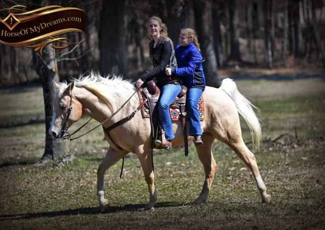 021-Shiner-Golden-Palomino-AQHA-NRHA-Reiner-Reining-Quarter-Horse-Gelding-For-Sale